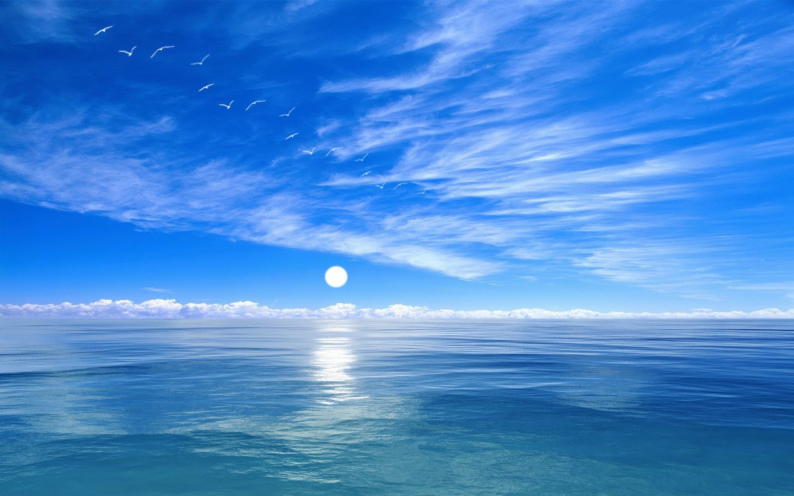 hình nền bầu trời, biển và xa xa là những cánh chim