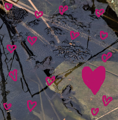 Happy Valentine s Day from the Pond