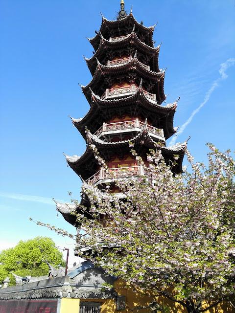 八重桜と七重塔とジェット雲