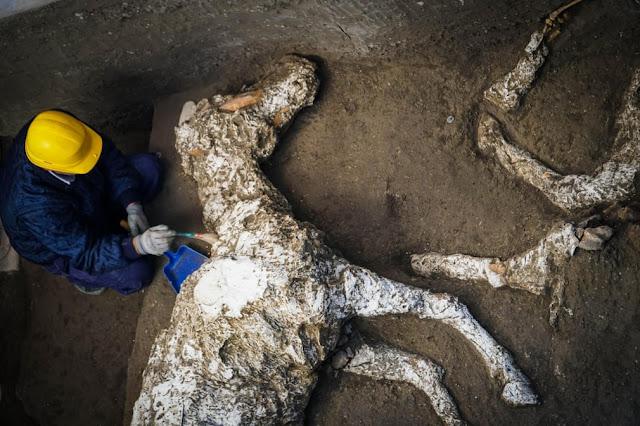 Археолог оглядає останки коня