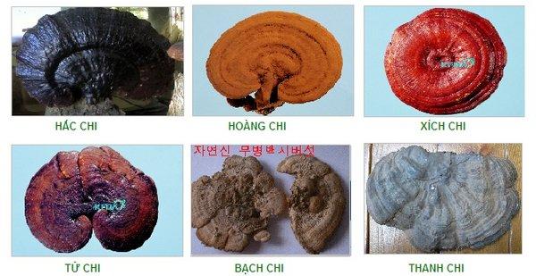 6 loại nấm linh chi Hàn Quốc tốt cho sức khỏe