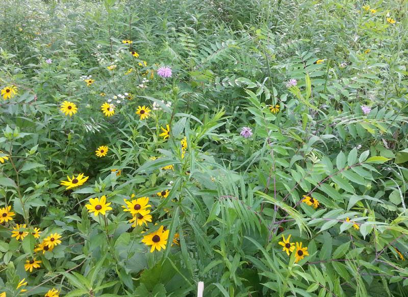 The Gardening Me Eloise Butler Wildflower Garden And Bird Sanctuary