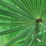 Saw palmetto effects on women