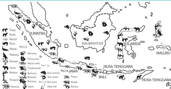Peta Pembagian Fauna Di Indonesia Doylc Asia