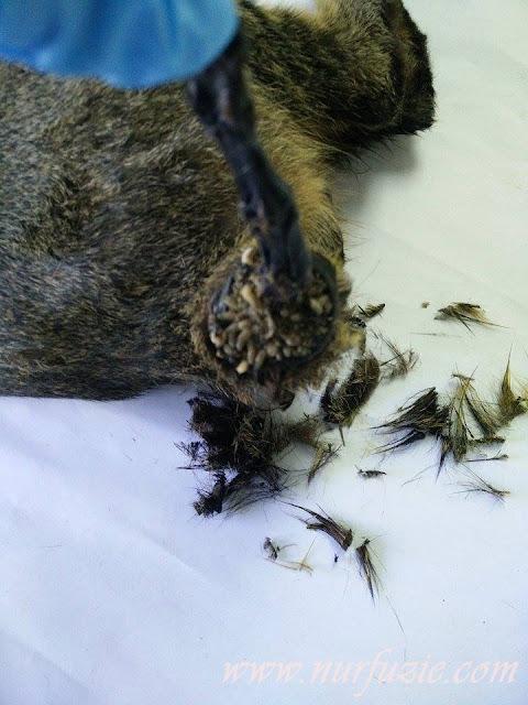 Cara Merawat Kucing Luka