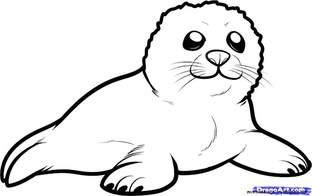 Arctic Seal Clipart Gallery