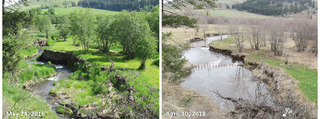 Triple Creek wetland restoraiton site in Okanogan County in May 2106 (left) with high cut banks and restoration site in April 2018 after critical restoration work put in place.