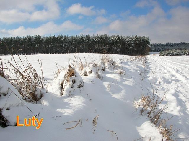zimowa droga, śnieg i las