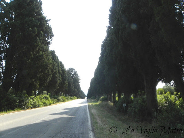 la strada verso Bolgheri