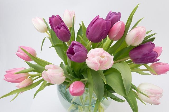 hoa tulip dep nhat 8