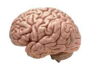 ilmuwan dan otak manusia