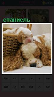 в корзине щенок спит и рядом спаниель лежит
