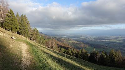 Niederwiler Stierenberg mit Blick ins Mittelland