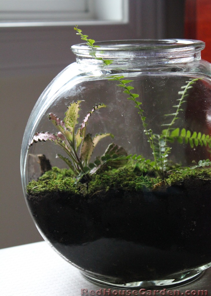 red house garden making terrariums so simple a child could do it. Black Bedroom Furniture Sets. Home Design Ideas