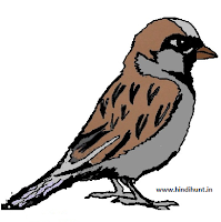 5 Lines on Sparrow in Hindi