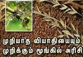 moongil arisi maruthuva payangal, moonkil arisi, Moongil Rice Healthy Benefits in Tamil, மூங்கில் அரிசி, bamboo rice , bamboo rice health benefits
