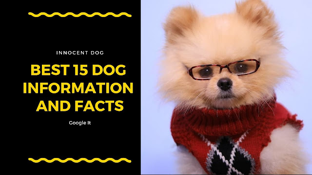dog information, Dog facts, Best dog Breeds