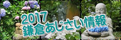 2017鎌倉あじさい情報