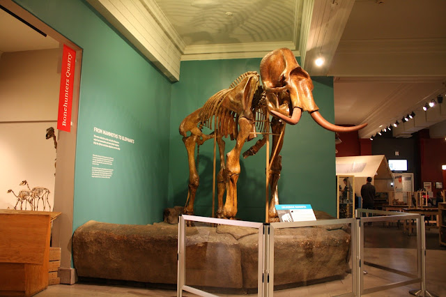 Mammoth skeleton at the Carnegie Museum of Natural History in Pittsburgh.