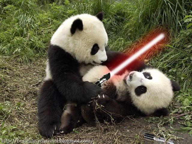 Quarreling pandas funny quarreling pandas voltagebd Choice Image