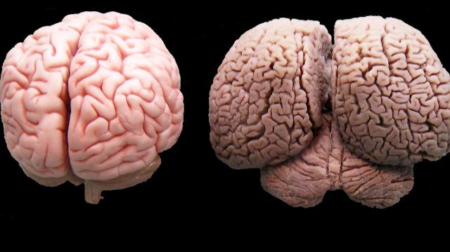 11 повседневных привычек, разрушающих наш мозг