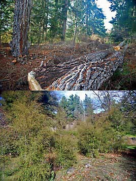 Native Restoration Before/After