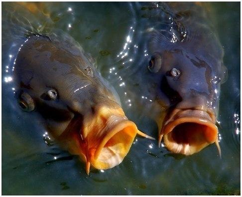 Рыбалка в Новомичуринске: 10 фактов о ловле Карпа весной!