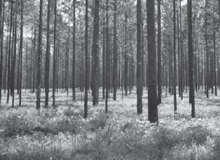 Pengertian Ekosistem dan Macam-macam Satuan Makhluk Hidup Dalam Ekosistem