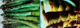 Klasifikasi Sayuran Berdasarkan Bagian Tanaman Yang Dimakan