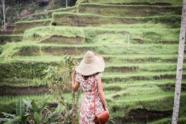 arrozales Tegalalang bali indonesia