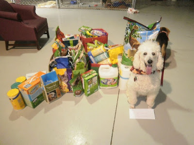 White poodle, Carma Poodale in front of shelter donations