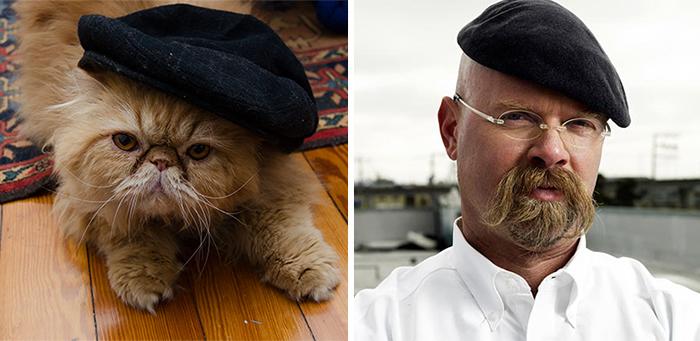 Um gato que parece Jamie do programa Mythbusters