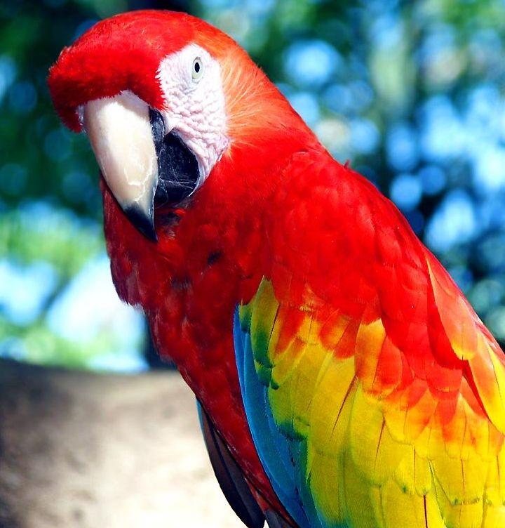 Картинки какие бывают попугаи