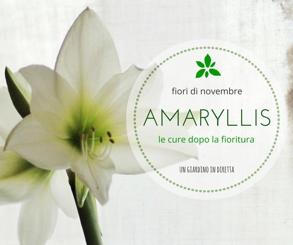 Fiori di novembre amaryllis le cure dopo la fioritura for Fiori in giardino