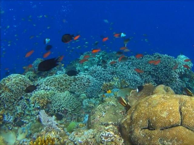 tempat-wisata-snorkeling-terbaik.jpg