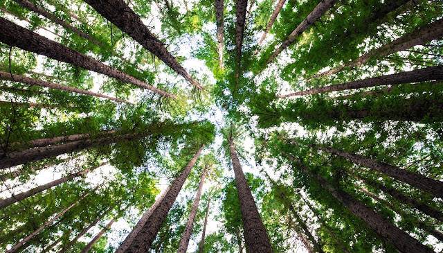 Forests 'held their breath' during global warming hiatus, research shows