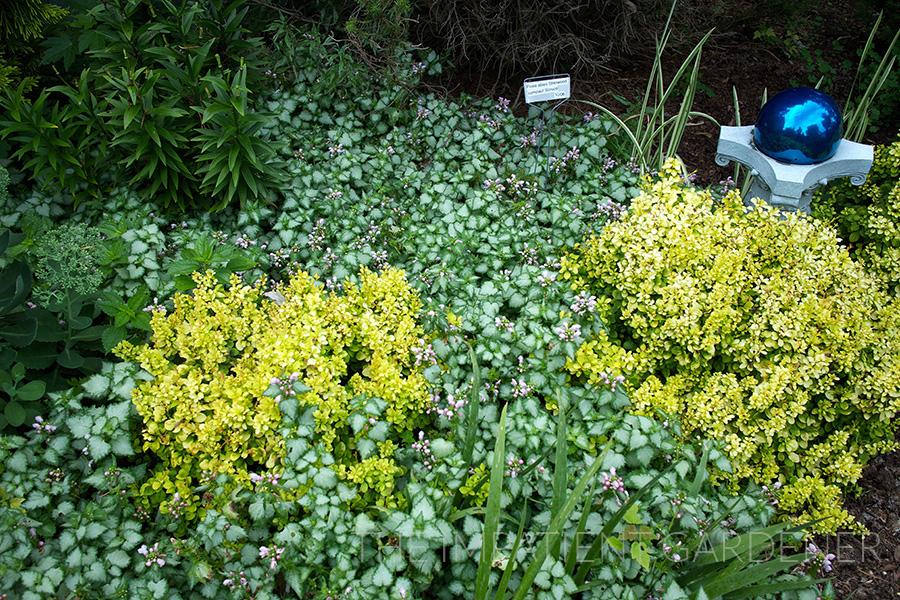 Garden Tour Where Conifers And Texture Rule The Impatient Gardener