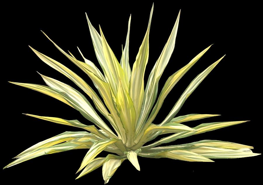 33 Jenis tanaman hias yang banyak digunakan untuk