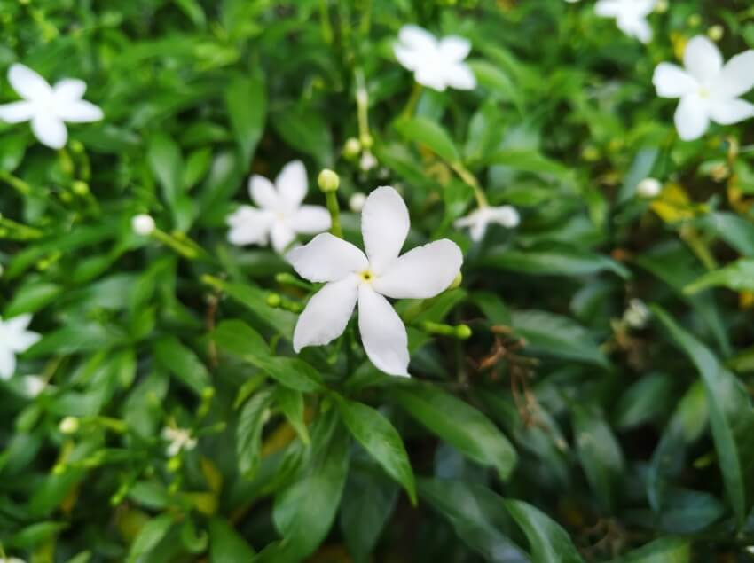 Xiaomi Mi 8 Lite Main Camera Sample - Day, Macro Distance, Flower