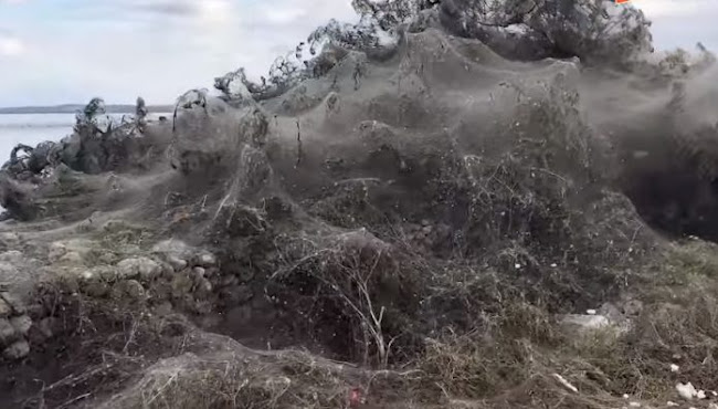 Γιγαντιαίος ιστός αράχνης 1000 μέτρων στη λίμνη Βιστωνίδα