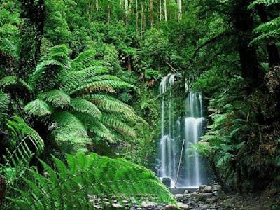 Manfaat dan fungsi Hutan - berbagaireviews.com