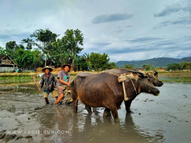Desa Wisata Kebonagung Bantul