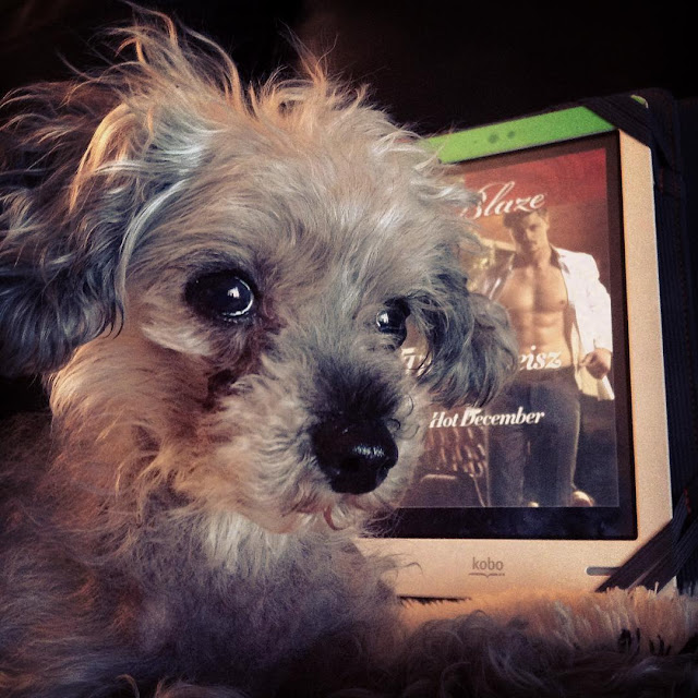 A sleek grey poodle, Murchie, lies with his head raised and his ears perked. His gaze is fixed on something outside the frame. Behind him is a white Kobo with the cover of One Hot December on its screen. The cover features a white guy with his white shirt open to expose his hairless chest.
