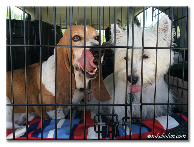 Bentley Basset and Pierre Westie in car kennel