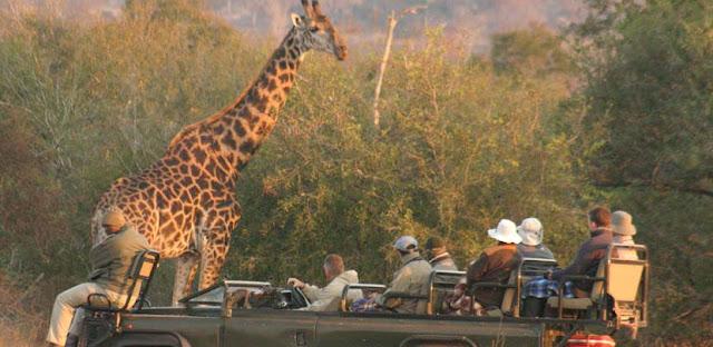 Safari sudafricano turismo responsable