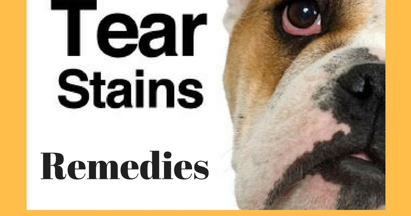 Can Certain Dog Food Cause Ear Infections