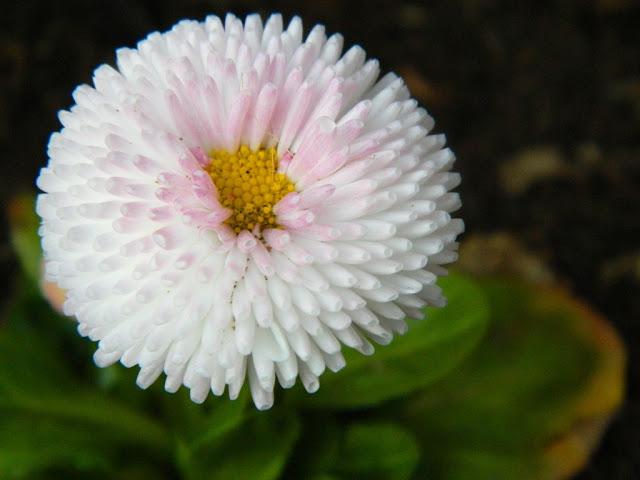 Pretty Flower,