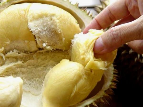 21 Manfaat Durian Bagi Kesehatan Dan Kecantikan Sungguh Menakjubkan