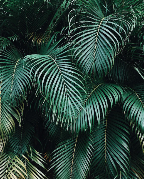 Palm leaves || palm, photography, trends, spring 2016, nature, flowers, flora || Allegory of Vanity