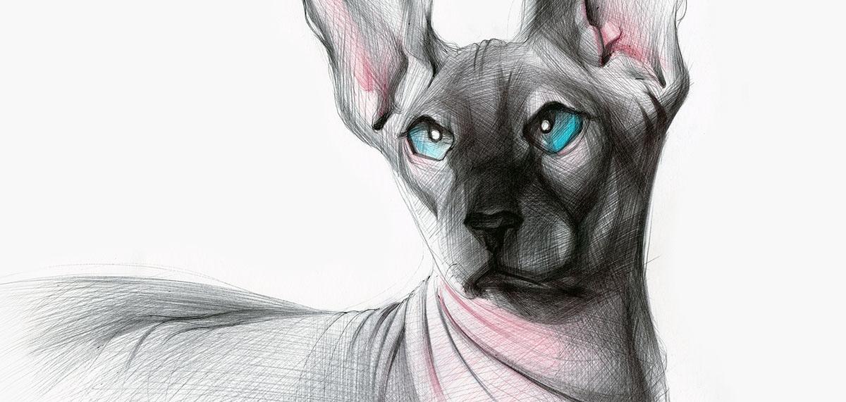 03-Siamese-Cat-Yelena-Yefimova-Animals-Drawn-with-Ballpoint-Pens-www-designstack-co